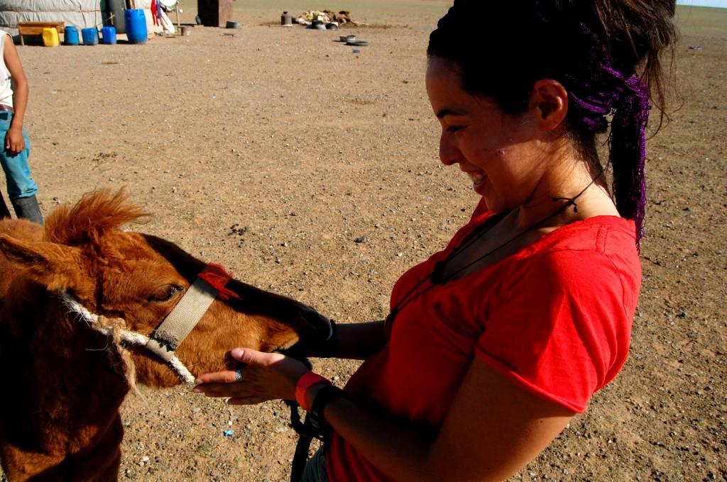 Baby Mongolian horse