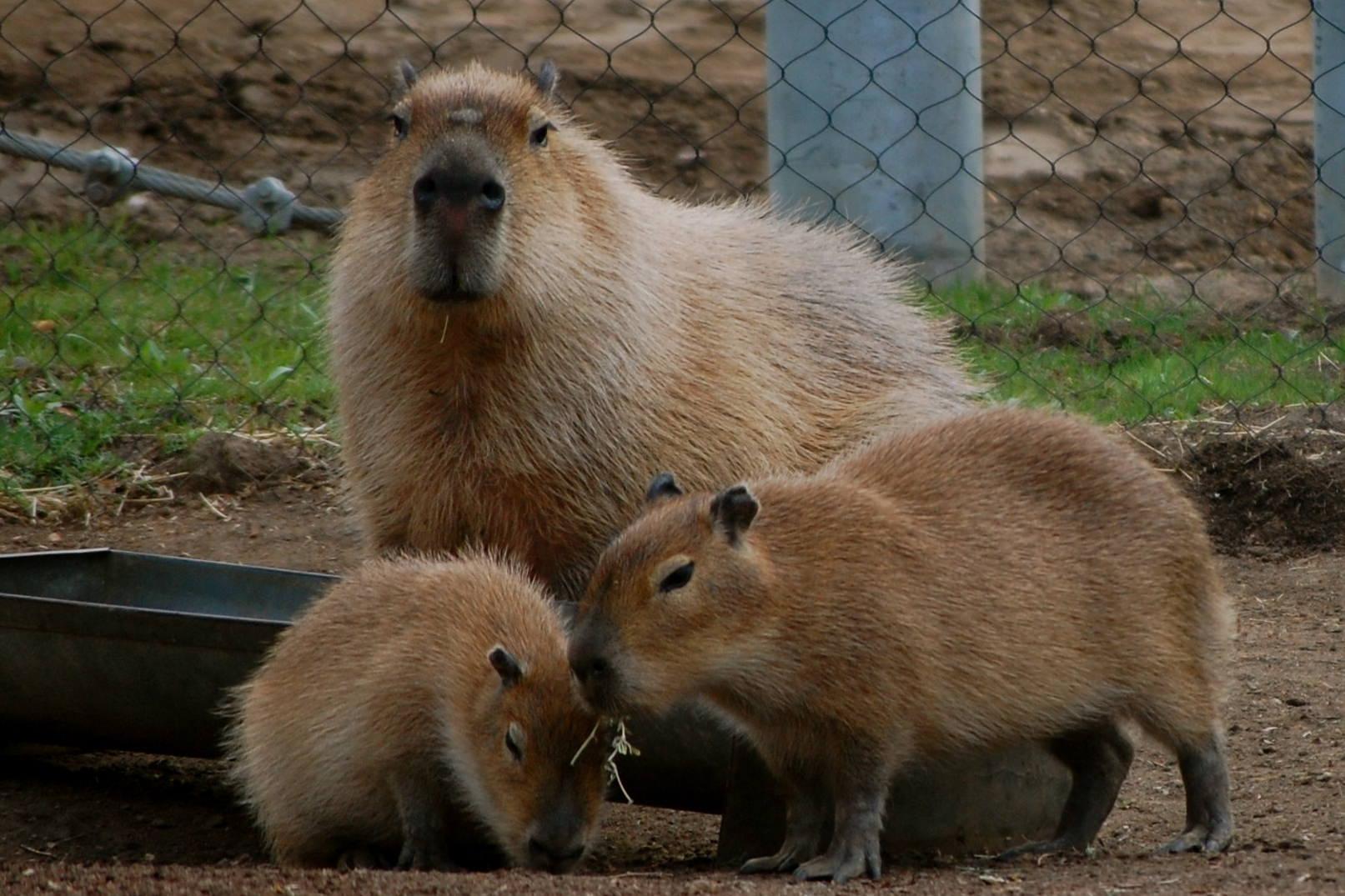 photos  the san diego zoo