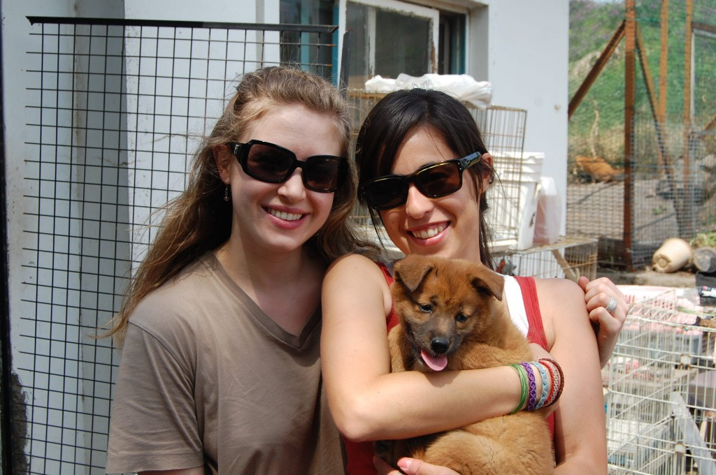 Volunteering at the animal shelter Jeju Island South Korea