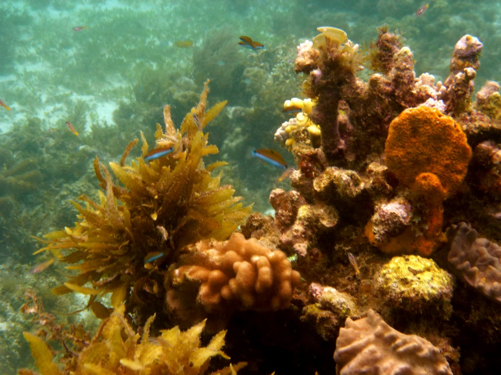 Colorful corals - diving in Malapascua Island