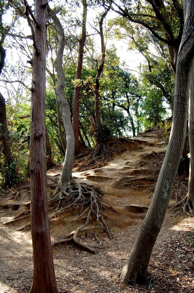 Daibutsu hiking trail in Kamakura, Japan