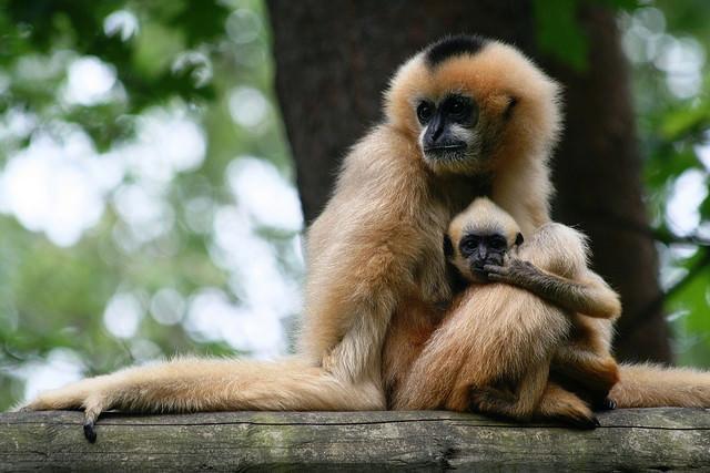 Baby monkey & mom