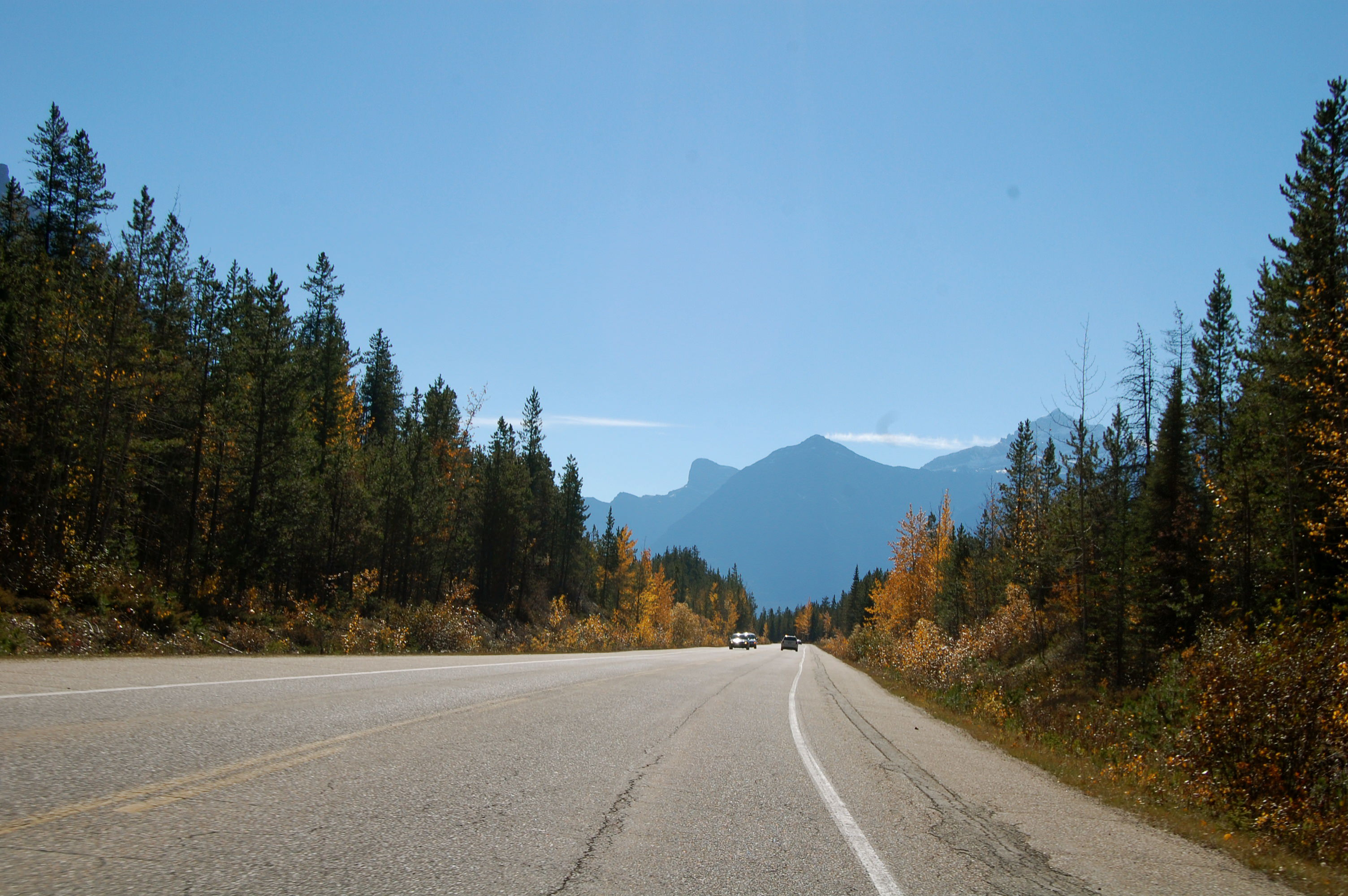 Road, mountains, trees in British Columbia