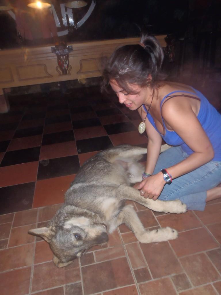 Puppy in bar in Dahab, Egypt.