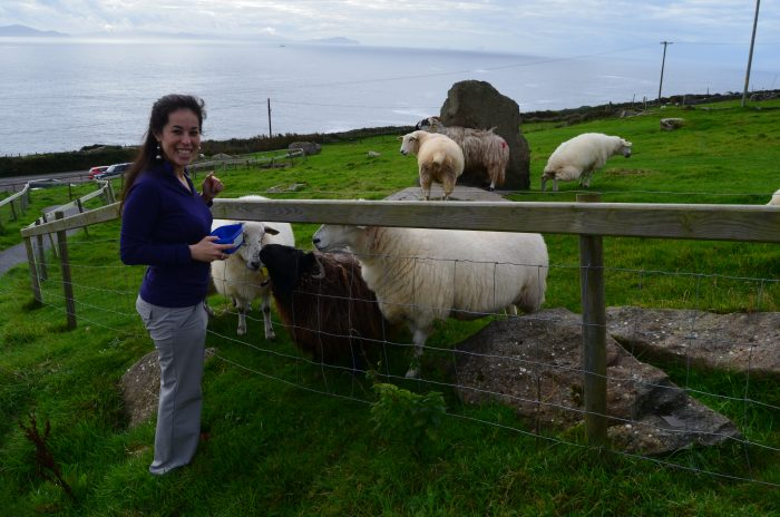 Naw, I don't look excited at all. Feeding sheep on the Dingle Peninsula.