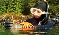 Covered in sea stars in Ketchikan!