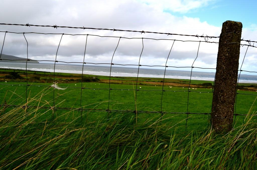 Stone fence in Irish field green sea