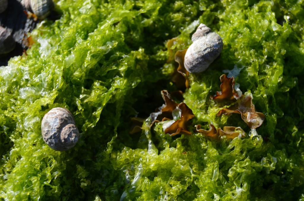 Alaskan snails