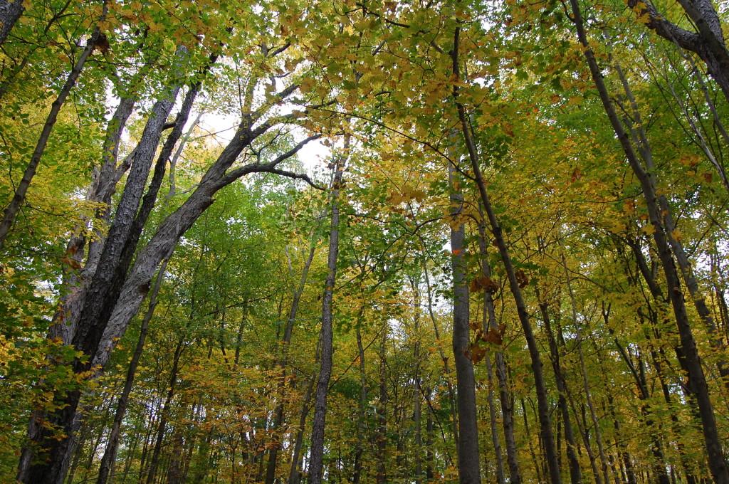Trees of Hamilton