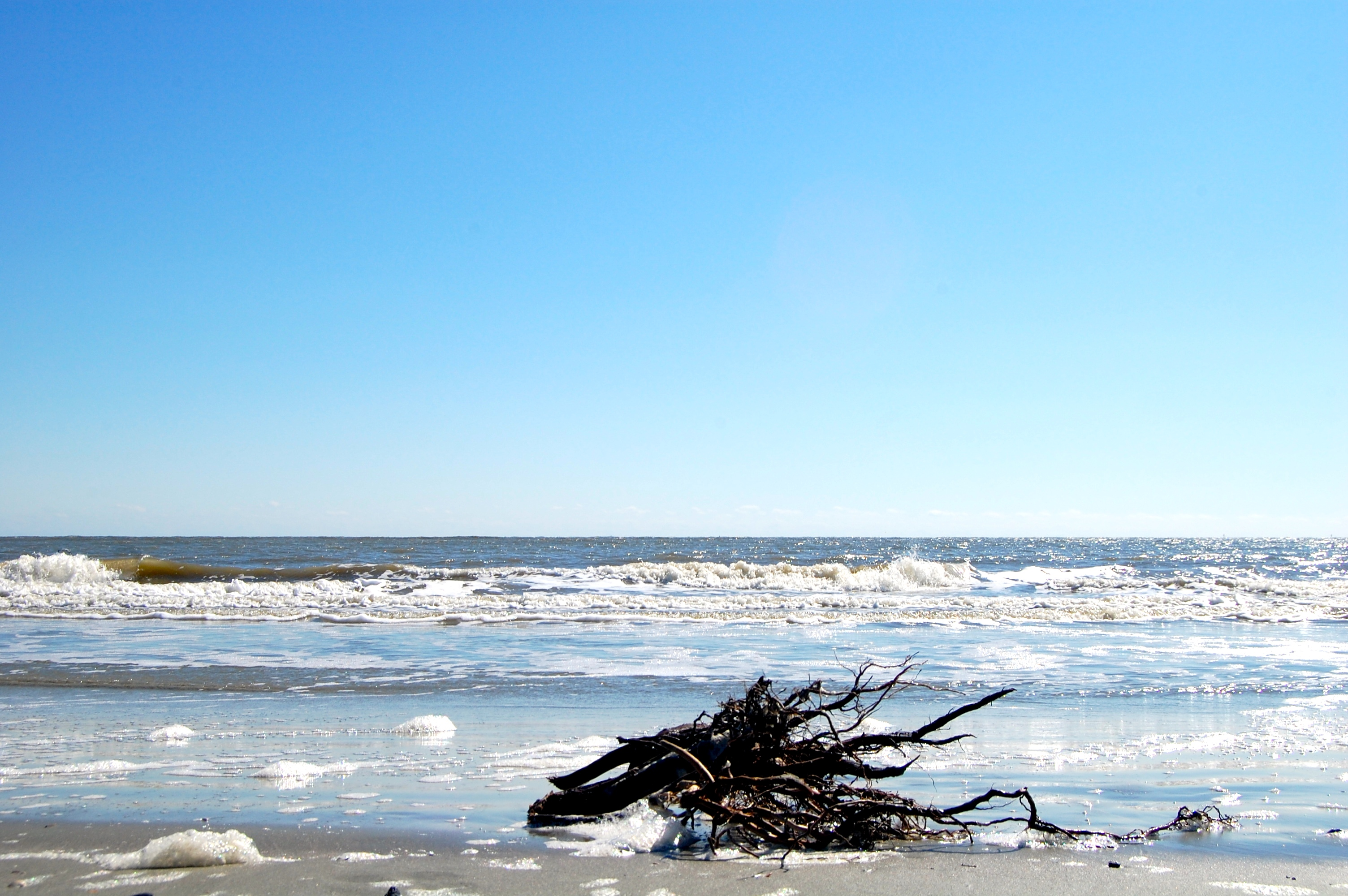 Driftwood on Folly Beach, SC