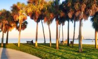 vinoy park, st. pete palm trees